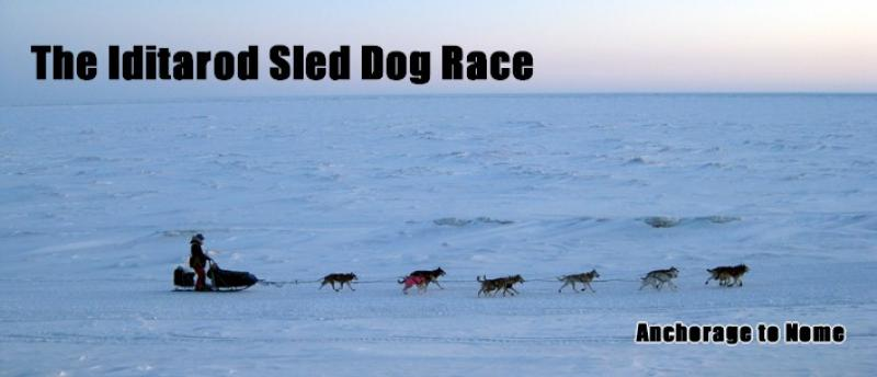 The Iditarod Dog Sled Race
