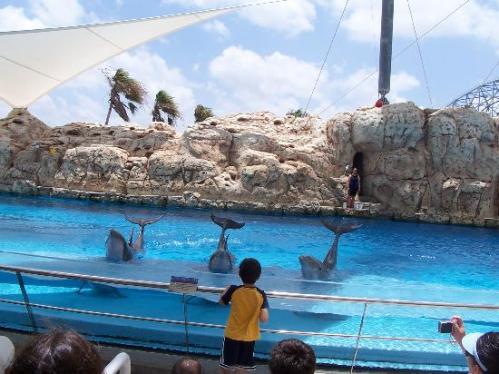 Corpus christi aquarium coupons
